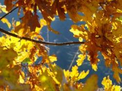 Podzim...