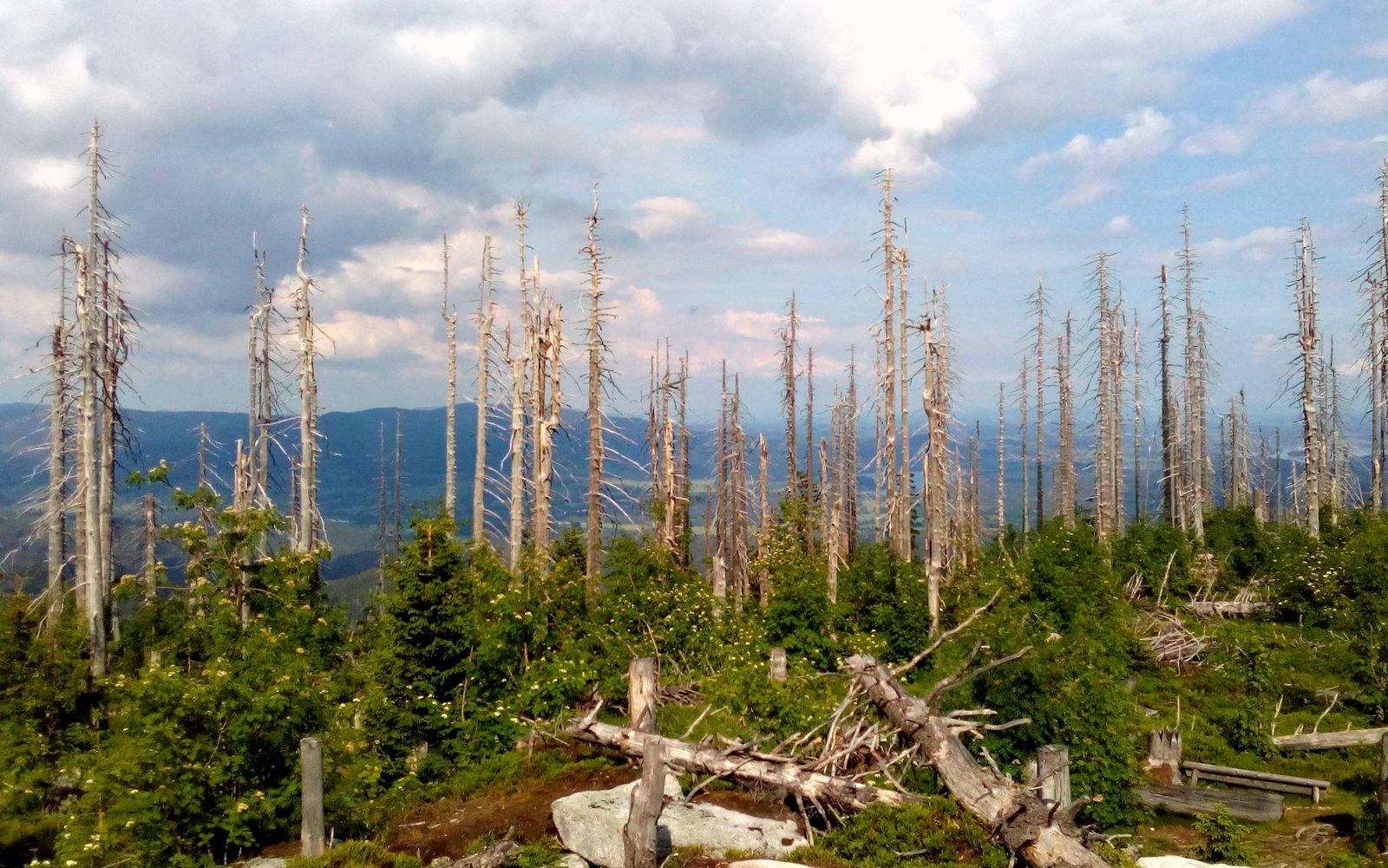 suché stromy a nový porost / foto -luzuce-